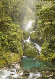 Mackay Falls in the Arthur Valley, Milford Track by Ross Curtis