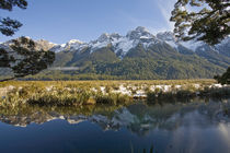 The Mirror Lakes in the Eglinton Valley, Fiordland by Ross Curtis
