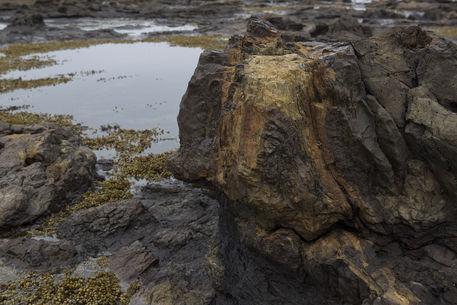 Petrified-tree-stump-1