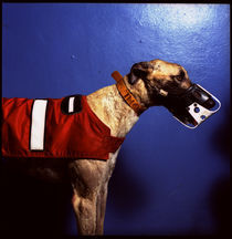 Greyhound-1-copy