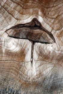 wooden-mushroom-0067A von Dennis Tarnay Jr