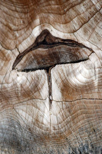 wooden-mushroom-0067v2 von Dennis Tarnay Jr