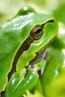Frog by Albin Bezjak