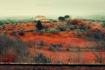 Italy, Tuscany by Ekaterina Shevi