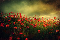 Red Poppies by David Fiscaleanu