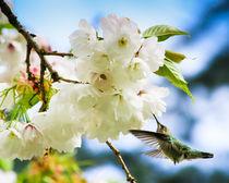 Hummingbird Blossom (landscape) von Chris Bidleman