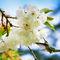 Hummingbird-blossoms-land