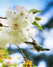 Hummingbird Blossom (portrait) von Chris Bidleman