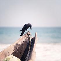 Waiting crow, India by Eugene Zhulkov