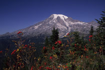 Mount Rainier in Fall by Wolfgang Kaehler