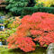 Japanese-maple-and-heavenly-falls