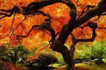 That Tree in Fall in the Portland Japanese Garden von Chris Bidleman