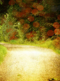 Country Lane in Autumn by David Drummond