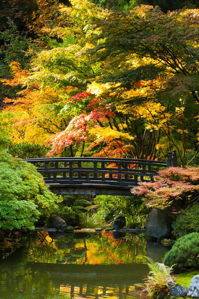 Chris bidleman gt moon bridge in japanese garden
