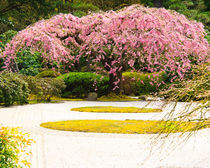 Weeping cherry tree in Flat Garden of Japanese Garden von Chris Bidleman