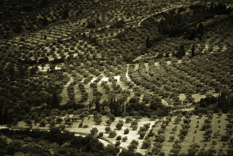 Greece-mycenae-landscape