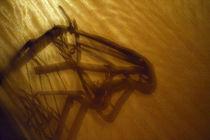 horse-head-shadow_v1 by Dennis Tarnay Jr