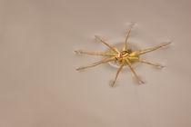 Skimming Spider_0034v2 von Dennis Tarnay Jr