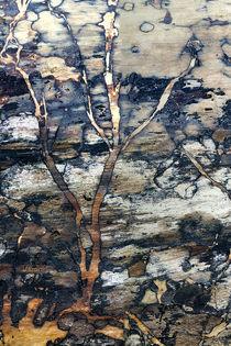 Tree Log_v1 by Dennis Tarnay Jr