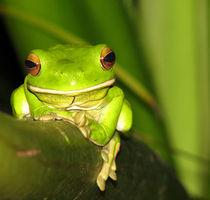 Green Frog von emanuele molinari