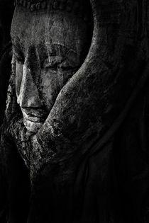 Buddha image  in the root .ayutthaya , Thailand