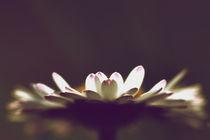 spring flower by emanuele molinari