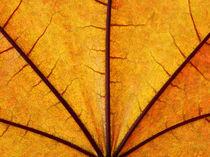 Leaf Close-up 004