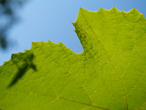 Green leaf by Darko Dukaric