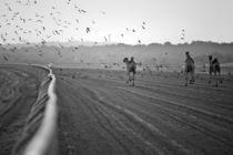Camels Race by Viktoryia Vinnikava
