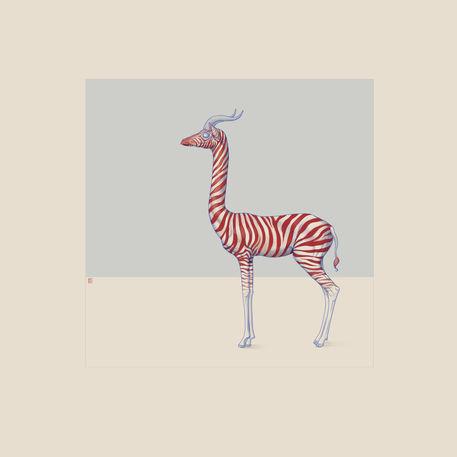 Safari-iii