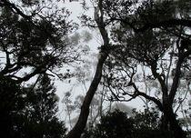 A Walk in the Clouds #6 von Kitsmumma Fine Art Photography