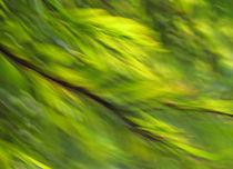 Winter Green von Kitsmumma Fine Art Photography