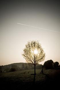 Morgenstimmung am Vogelsberg XIII von Thomas Schaefer