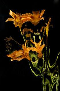 Lily Distortion 3113 von Thom Gourley