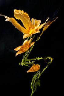 Lily Distortion 3146 von Thom Gourley