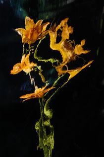 Lily Distortion 3154 von Thom Gourley