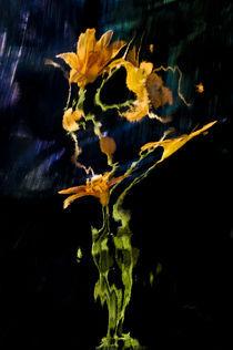 Lily Distortion 3156 von Thom Gourley