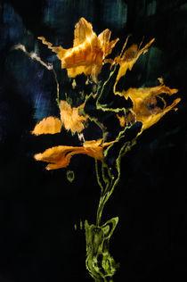 Lily Distortion 3166 von Thom Gourley