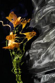 Lily Distortion 3174 von Thom Gourley