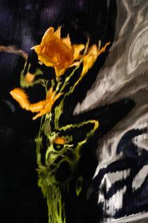 Lily Distortion 3181 von Thom Gourley
