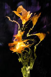 Lily Distortion 3196 von Thom Gourley