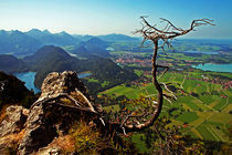 the tree on the Bavaria Landscape by Pedro Liborio