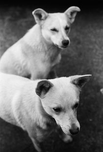 Dog-twins by Nataliya Suprun