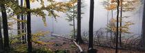 Nebel im Herbstwald 2 von Intensivelight Panorama-Edition