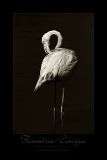 Flamingo von Severine Pillet