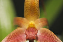 Close-up Colorful Orchid von Melissa Salter