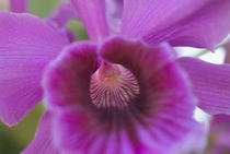 Close-up view of colorful Orchid by Melissa Salter