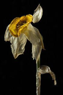 Dead Flower  178 von Thom Gourley