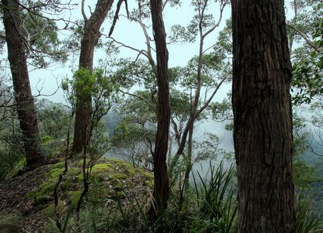 Banksia-point