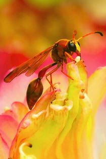 Wasp on Lotus. von Moo  tea43